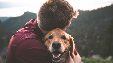 Waarom maken huisdieren gelukkig?