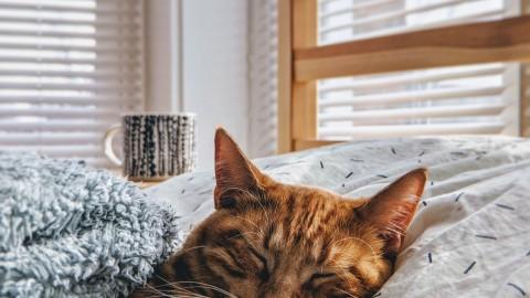 Leuke weetjes over katten