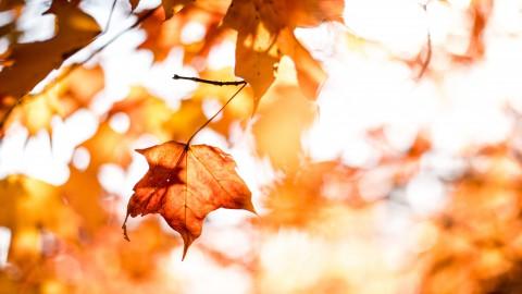 Herfsttip: herfstslinger voor bij de voordeur