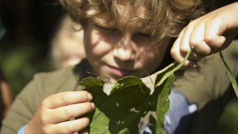 IVN Flevoland zoekt kinderdirecteuren Natuur & Duurzaamheid