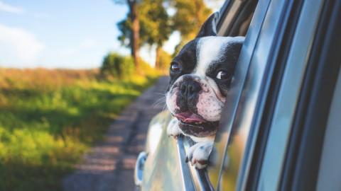 3 Tips voor een soepelere autovakantie
