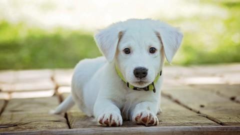 Tips om oververhitting bij je hond te voorkomen