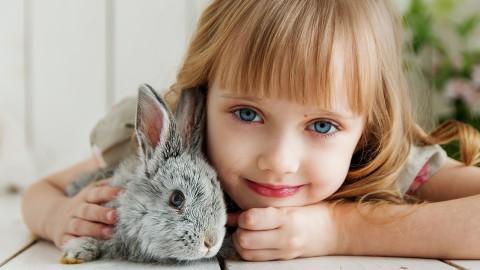 KVK: Is er genoeg dierenopvang deze zomer?