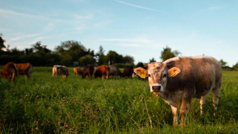 Laat je horen voor een betere toekomst voor dieren in de vee-industrie