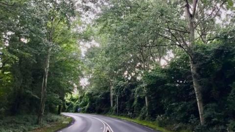Aankondiging protestactie van SP en PvdD: Stop bomenkap Westerdreef