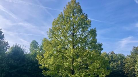 Bijzondere bomen in Almere gezocht