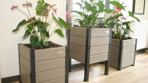 Heb jij de plantenbak style New York mét plant van InGarden gewonnen? Check je mail!