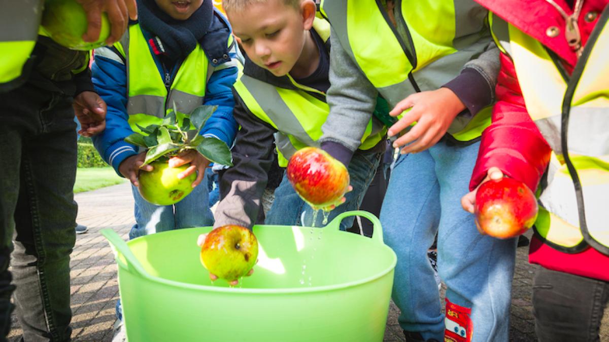 Schoolklassen komen appels plukken bij Stad & Natuur