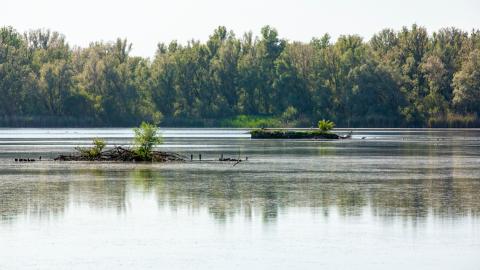 Herstel vogeleilanden Lepelaarplassen start in augustus