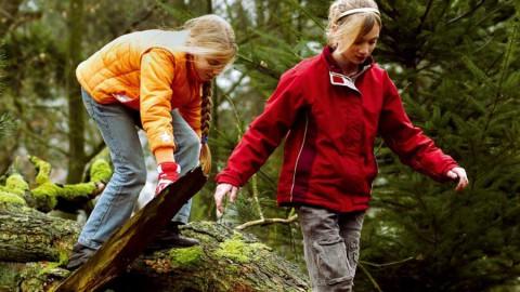 Bosavonturen in het Almeerderhout