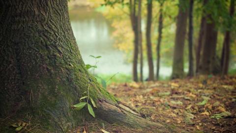 Op pad met de boswachter door het Almeerderhout