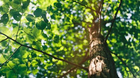 Alle kinderen in Nederland gaan helpen met bomen planten