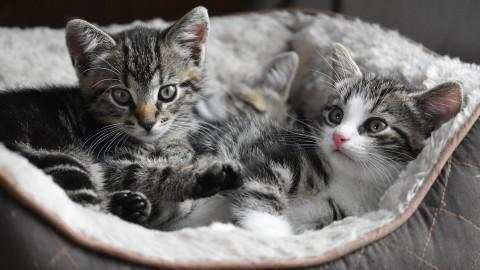 Vier van de vijf gedumpte kittens dood