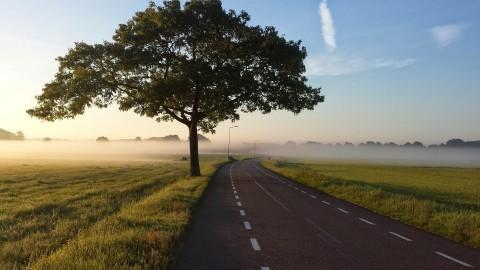 Campagne 'Nederland plant bomen'