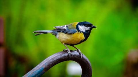 Wereld Trekvogeldag