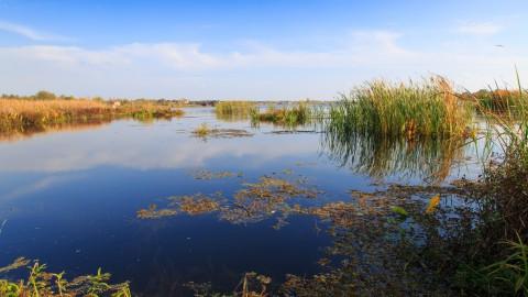 Onderzoeksalternatieven waterverbinding Oostvaardersoevers ter inzage
