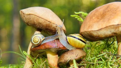 Bijzondere paddenstoelen schieten de grond uit