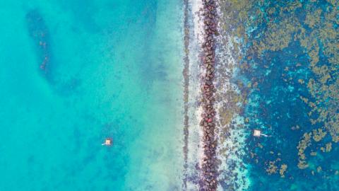 Weer blauwalg in water Stedenwijkstrand