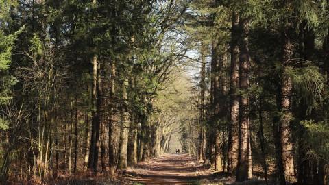 Eerst toestemming vragen voordat je met groep in bos gaat hardlopen