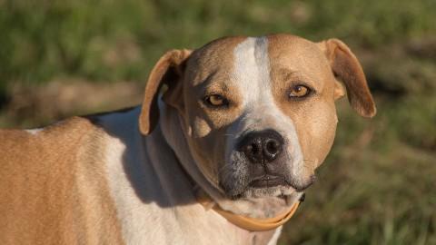 Buurtbewoner Staatsliedenwijk waarschuwt voor agressieve hond