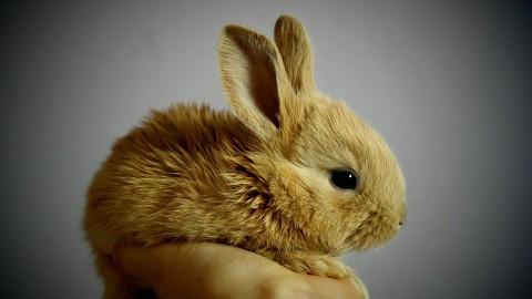 Gemeente staat garant voor dierenasiel