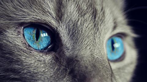 Druk in kattencafé; meer personeel nodig