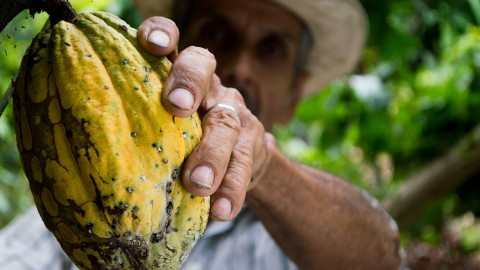 Nederland grootste importeur cacaobonen