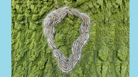 Petitie tegen nieuwe eikenbomen