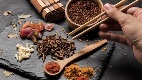 Insecten populairder dan kip bij Dubbel Op