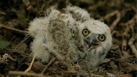 Nachtbrakers, uilen van de wereld