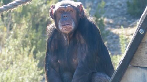 Wordt jij deze zomer dierenverzorger bij Stichting Aap?