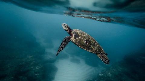 Almere Jungle is het dumpen van schildpadden beu