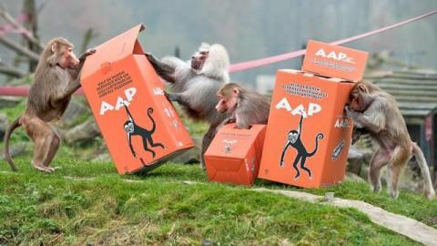 Stichting AAP blijft cartridges en mobieltjes inzamelen!