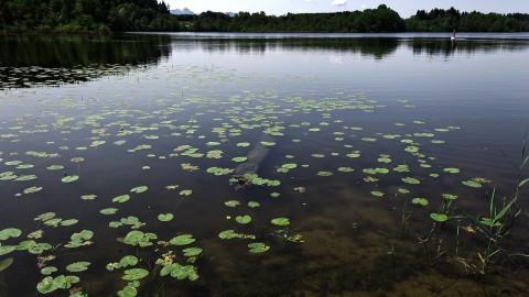 Vaker maaien om 'moeras van waterplanten' te voorkomen