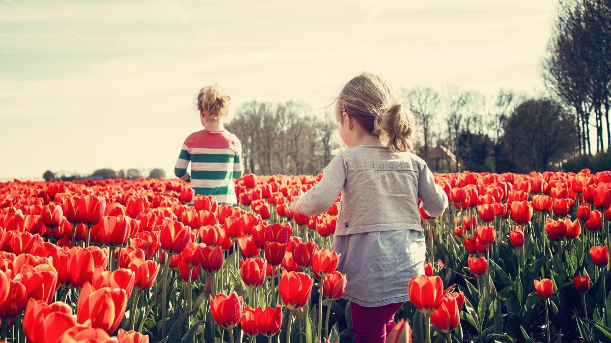'Tulpenroute dit jaar een enorm succes'