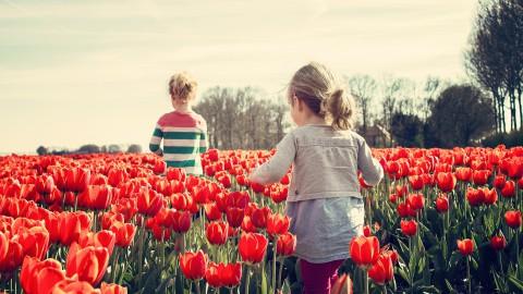 Bezoekers Tulpenroute week te vroeg