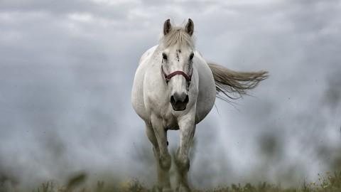 Anouk en Sylvia zitten het beste op hun paard
