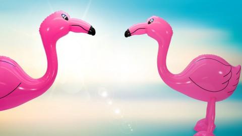 Pinkster Outdoor Event trekt minder bezoekers