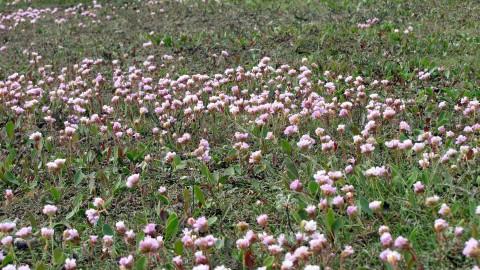Aanleg klimaatarboretum Regenboogbuurt