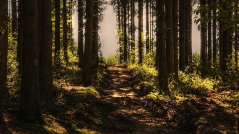 166 hectare nieuwe bomen geplant in Flevoland