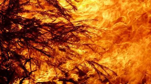 Brandweer uren bezig met hooibrand in Pampus