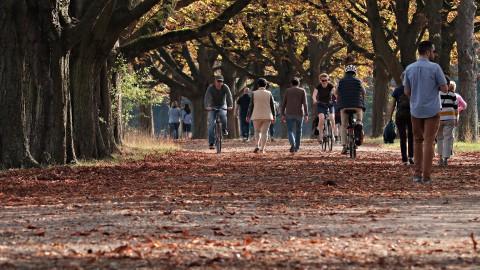 Flevolandse politie bekeurt gemiddeld 167 fietsers per maand