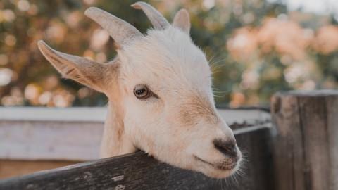 Jaaaa... jonge geitjes, maar we kunnen er niet heen!