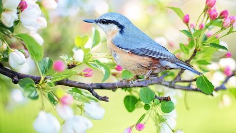 Vogelbescherming komt met gratis vogelkaart