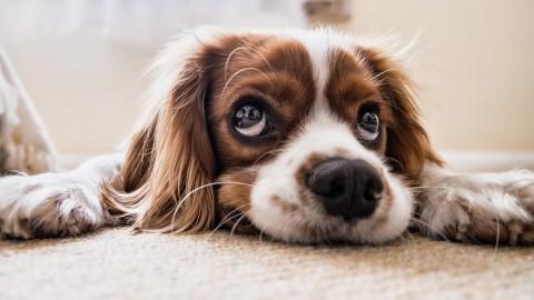 Zoektocht naar hondje dat uit auto is gegooid