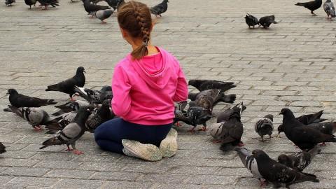 Denk goed na als je vogels voert!