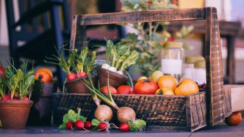 Eerste masteropleiding in Almere draait om duurzame voedselproductie