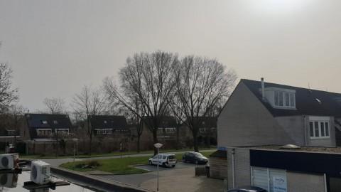 Bewoners Pastelstraat starten buurtcollectief tegen slecht onderhouden groen