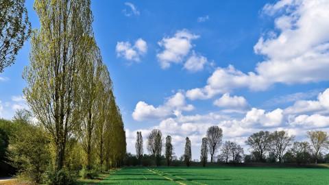 Start aanplant bomen langs Biddingringweg (N305)