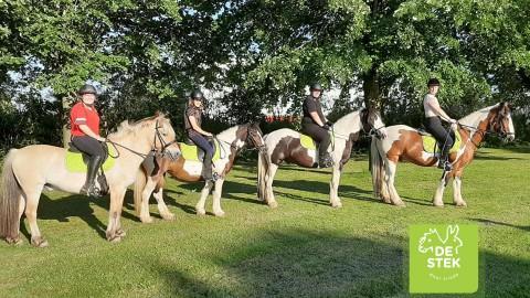 Paarden activiteiten op Kinderboerderij en Manege de Stek
